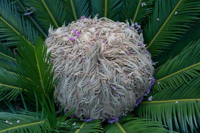 Palm Plant Kemah Texas-5671.jpg
