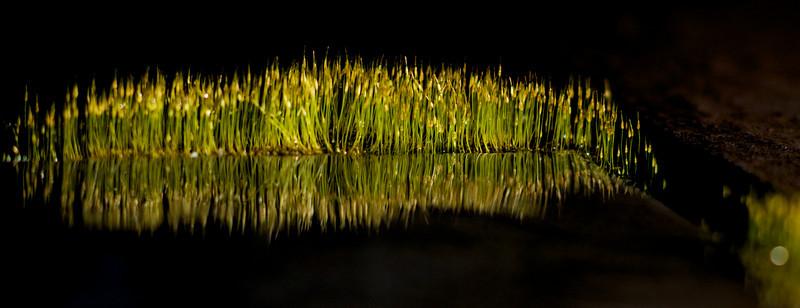Moss_8186.jpg