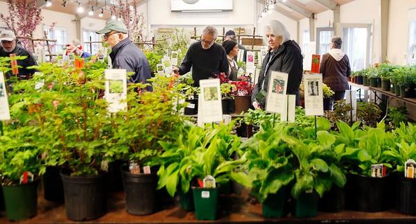 2019 Berkshire Botanical Garden Plant Sale-051019