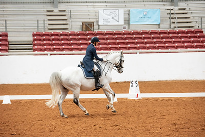 Horse 127