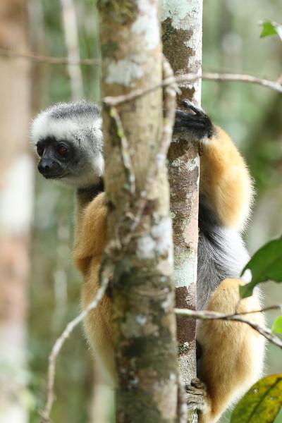 Madagascar_2013_FH0T8489.jpg