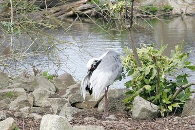 Newquay Zoo 28/03/2009
