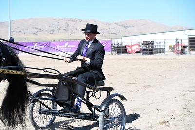 Felix driving stallions
