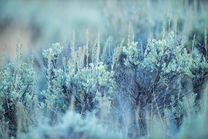 Scenic-2-4.jpg