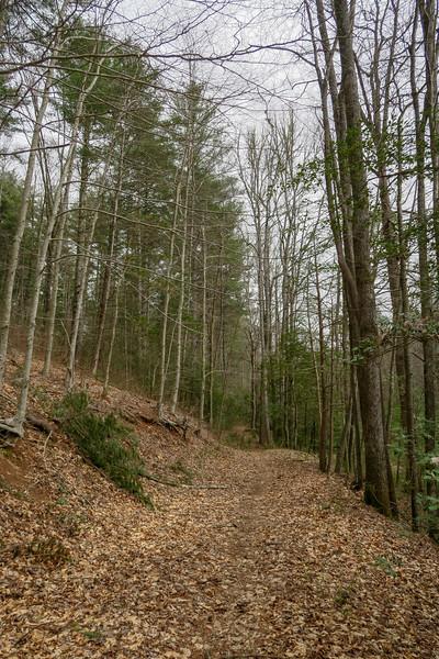 Bear Branch Trail -- 2,450'