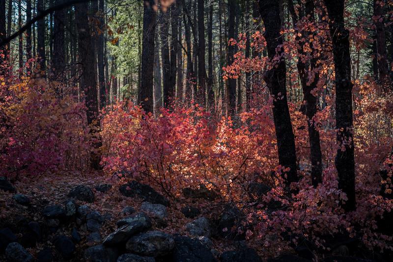 Sedonaa Thanksgiving Fall (14).jpg