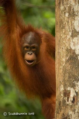 Malaysian wildlife - Kuching (2015)