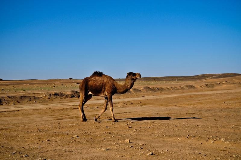 Day4-Sahara-58.jpg