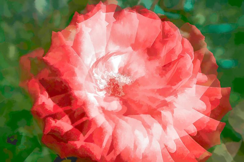 may 29 - rose.jpg