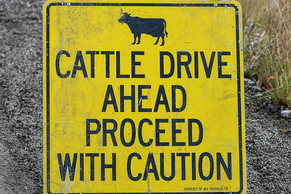 10-13-16 *^Cattle Round Up Day 3