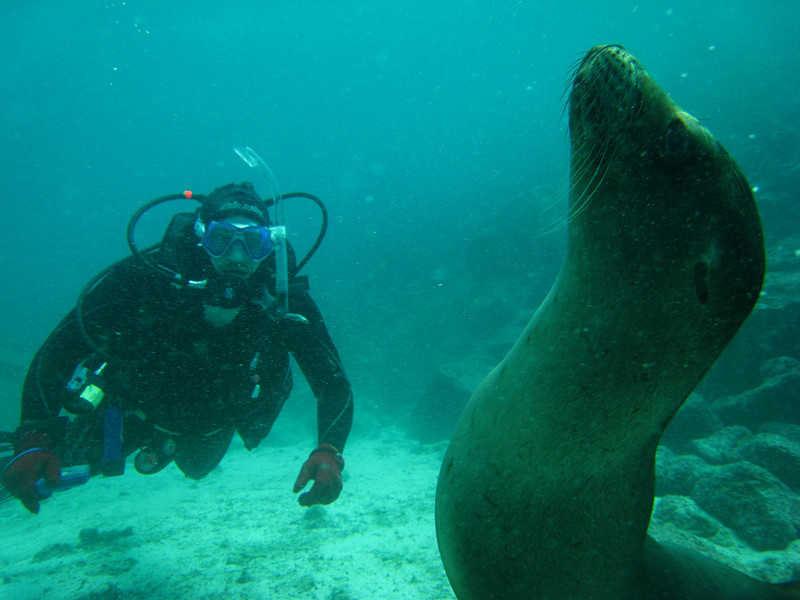 Diving in the Galapagos (301 of 392)
