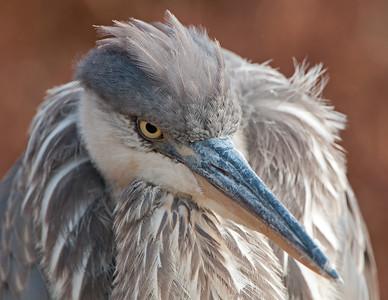 My Bird Photo Life List