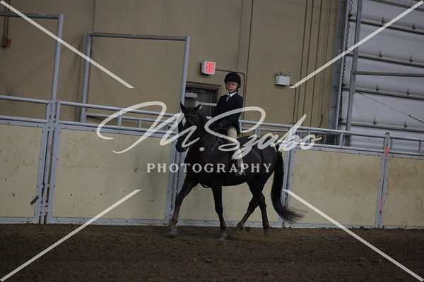 All Breed Walk/Trot Hunter Pleasure 11 years & under