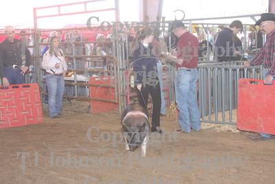 2009 Klein ISD Swine Show Class 1