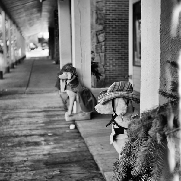 fake-dogs.jpg