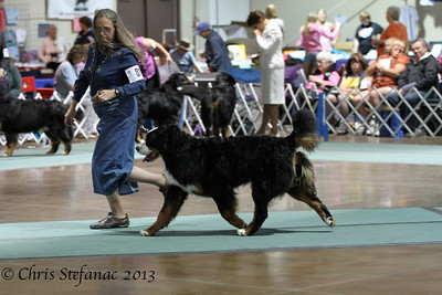 Futurity 12-15 Puppy Dog BMDCA 2013