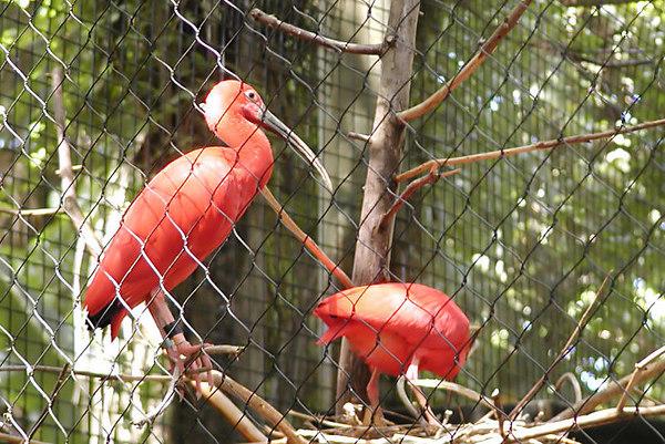 Dreher Park Zoo - West Palm Beach