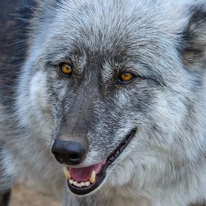 11-05 Rocky Mountain Wildlife Foundation