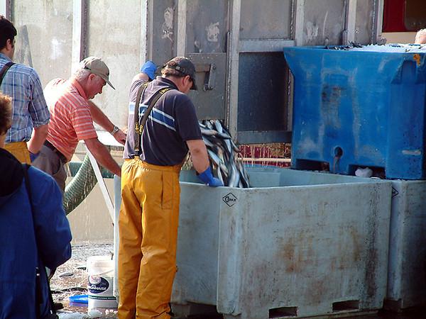 Cobh - Unloading fish at the harbor
