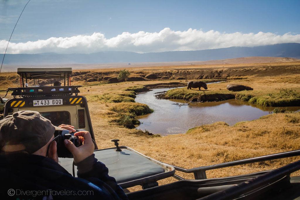Observing hippos in the Serengeti