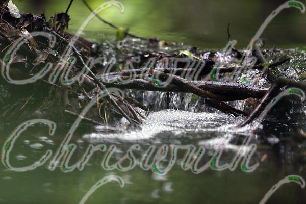 Beavers Land & dams around Chestnut Hill (MA)