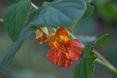 florals and nature studies