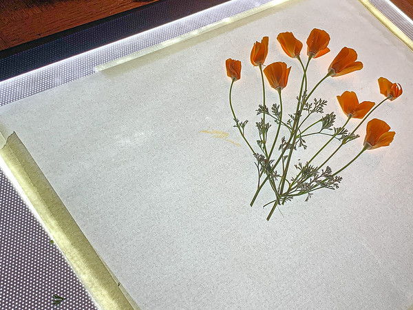 Lightbox Flowers