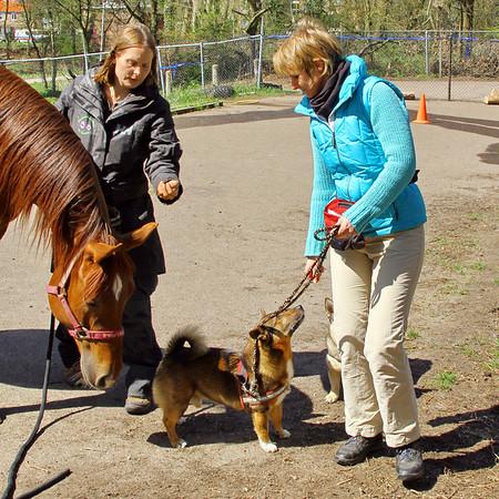 20 april 2013 Voorbereiding CAP met paard