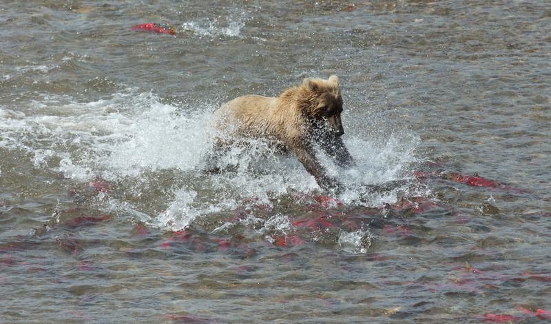 Brown_Bears_GAA_3796-Edit.jpg