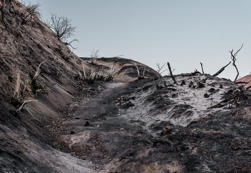 Strough Canyon Post Fire
