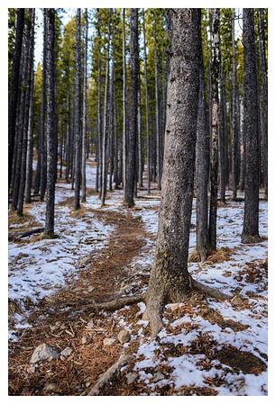 2015-02-15 Prairie Mountain