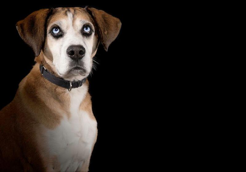 Dog10.jpg
