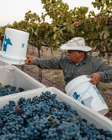 Perissos Vineyard
