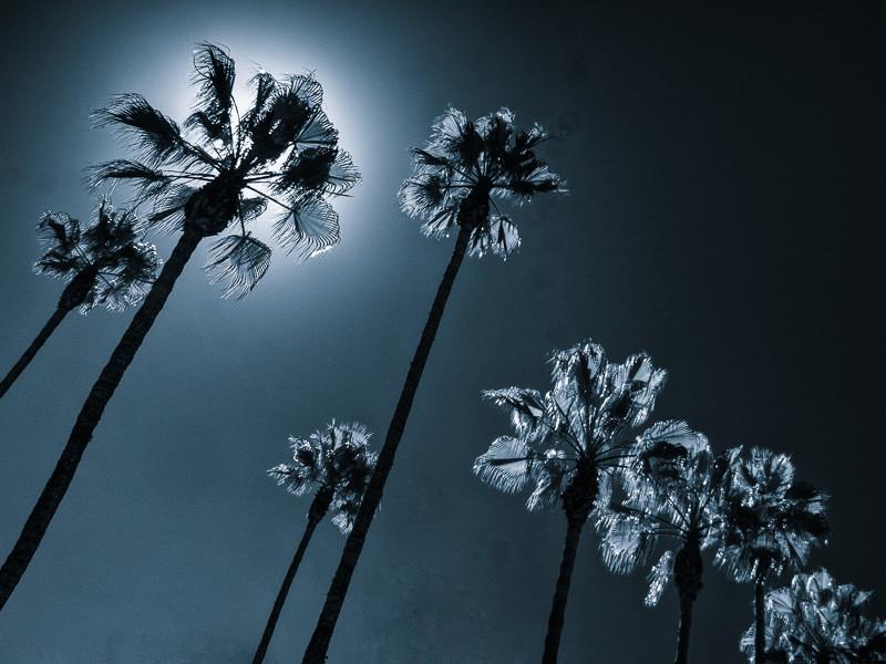 October 17 - Palm trees.jpg