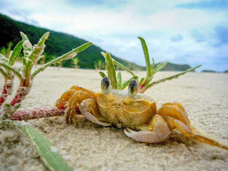 do mel crab.jpg