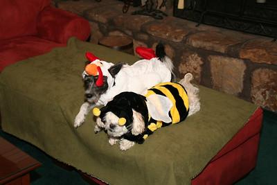 2007 Halloween Dogs