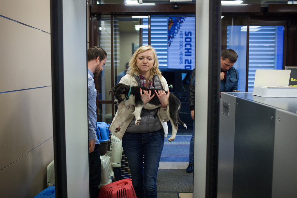 . In this image released on Friday, March 14, 2014, passing through security door to a new life on the other side! Humane Society International has been working with Robin Douglas Macdonald and Olympic silver medalist Gus Kenworthy for the past several weeks in trying to transport the dogs from Sochi, Russia, to the United States. (Alexander Zemlianichenko Jr./AP Images for Humane Society International)