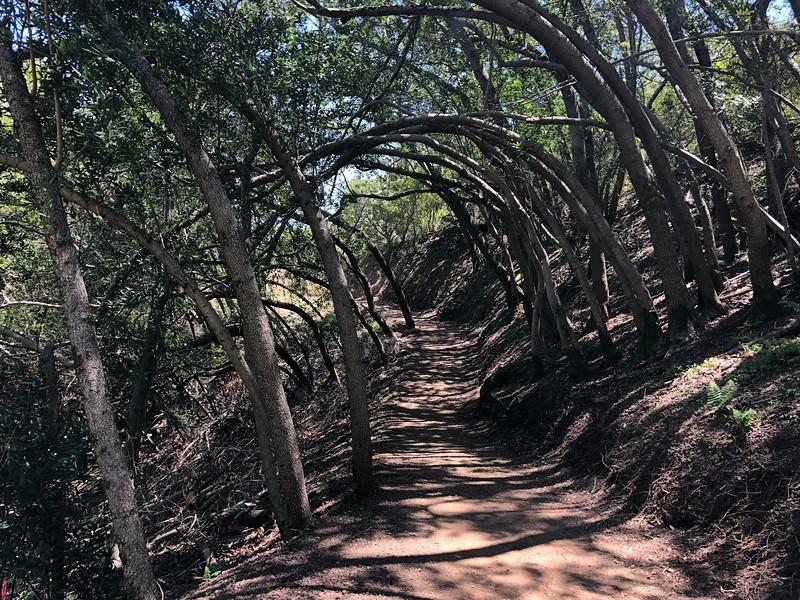 Tree Tunnel at Mt. Umunhum Trail