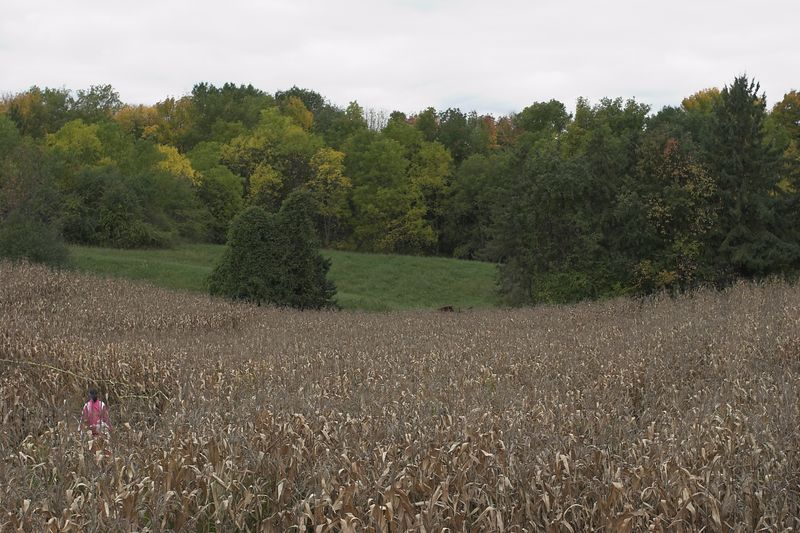 View from the corn maze