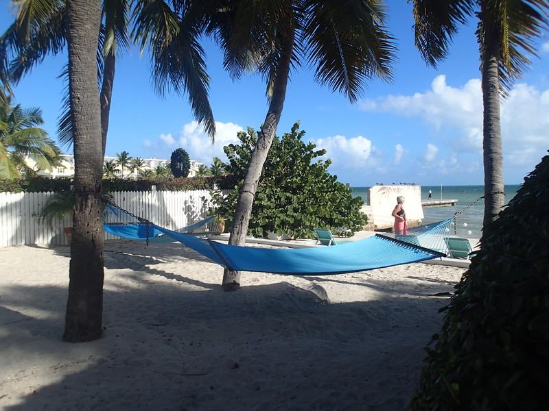 Southernmost hammocks.JPG