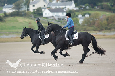 Friesian Beach ride 10 Oct 2015