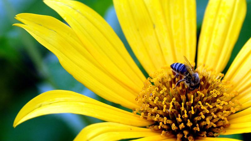 Flowers2 1920x1080 (12).jpg