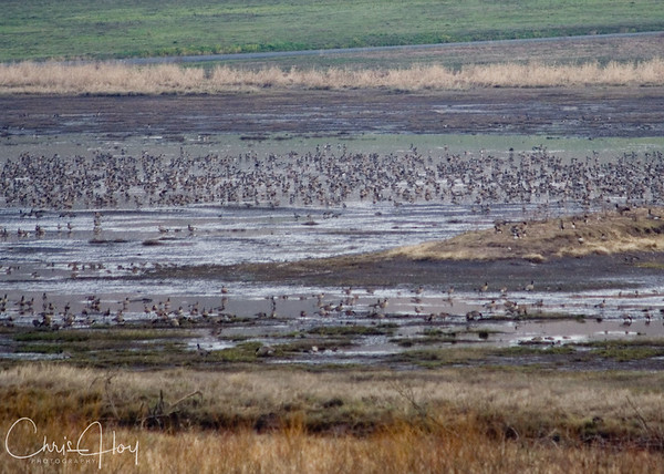 Baskett Slough National Wildlife Refuge