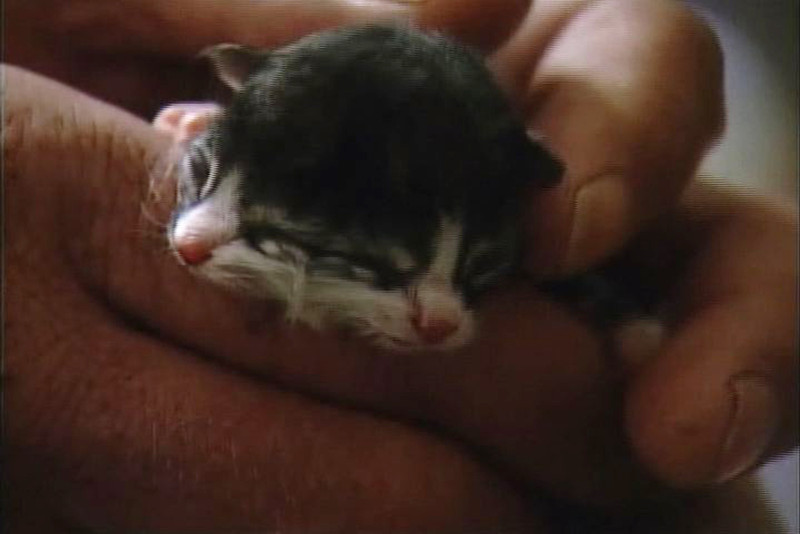 . In this undated image taken from video provided by ABC affiliate WCHS TV, a newborn kitten, known as Two Face, is held at the Kanawha Charleston Humane Association in Charleston, W.V. The kitten is being given a 50 percent chance of survival by an area veterinarian. Dr. Erica Drake says the kitten was born with a rare condition called diprosopus, which means the kitten literally has two faces. Two Face has four eyes, two noses and two mouths. (AP Photo/WCHS TV)