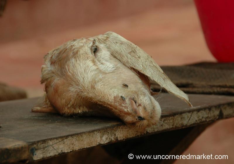 Madurai, India: Goat Head