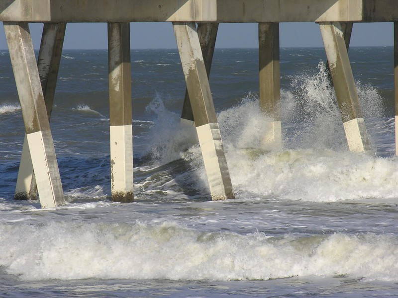 Azalea_3_Wilmington_2007_003.jpg