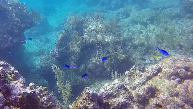 Ciesla-GOPR6658 - KC Blue fishes.jpg