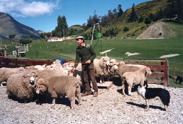 New Zealand 1990's