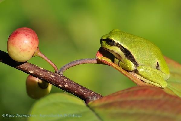 Reptielen, Reptiles, Amhpibiën, Amphibians