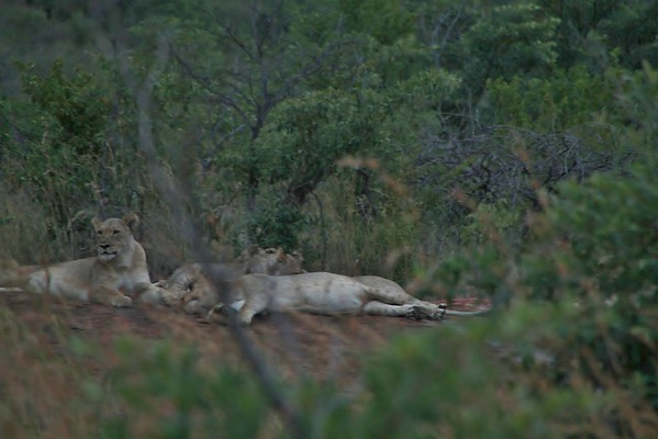 Africa 3-20-2015